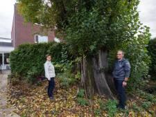 Groene kolos neemt tuin in Goirle compleet in beslag, bewoners willen hem om