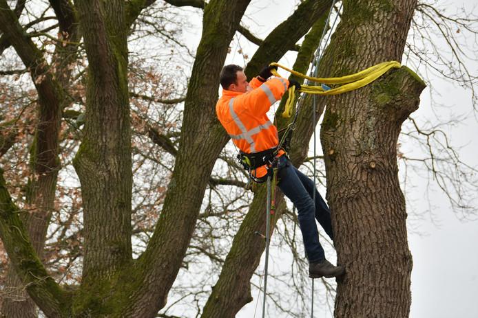 Derk Jan Zuur bevestigt de kabels waarmee de trekproef wordt uitgevoerd. De bomen aan de Haaksbergerweg mogen blijven staan.