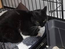 Catnapping: kat ontvoerd na jacht op vogeltjes, dreigbrief voor bazin