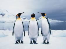 Dierentuin treurt om dood van stokoude pinguïn Oma