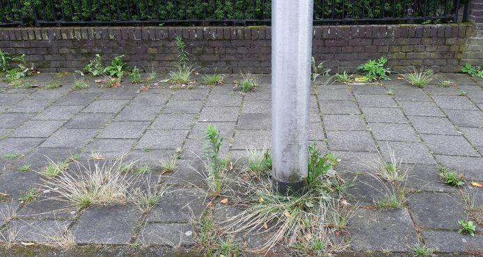 Onkruid in de openbare ruimte in Enschede.