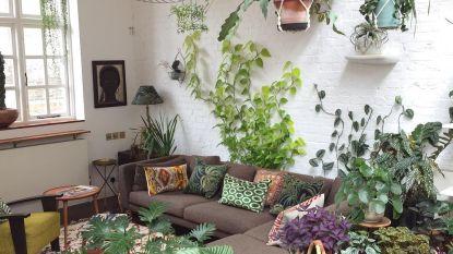 Ieder huis een halve jungle