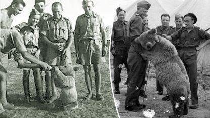 Deze beer was een van opmerkelijkste soldaten in WO II en hij krijgt nu eigen film