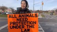 Activiste (65) doodgereden door vrachtwagen van slachthuis, dierenrechtenorganisatie PETA in shock
