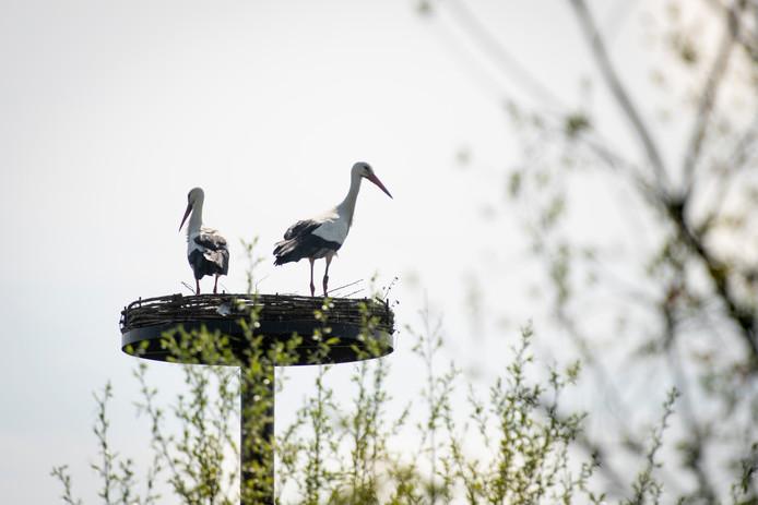 Het ooievaarsnest komt in Het Kanteel, aan de rand van de Waalwijkse wijk Landgoed Driessen.