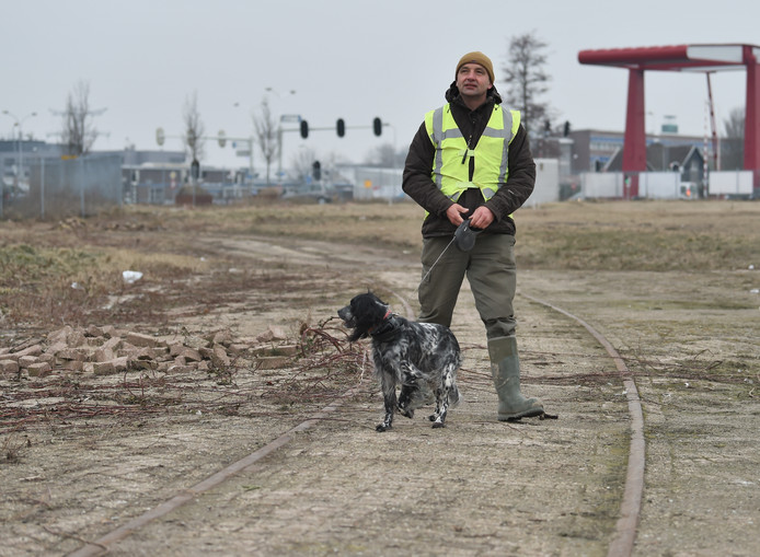 Jane met haar baasje op het Scheldeterrein in Vlissingen.