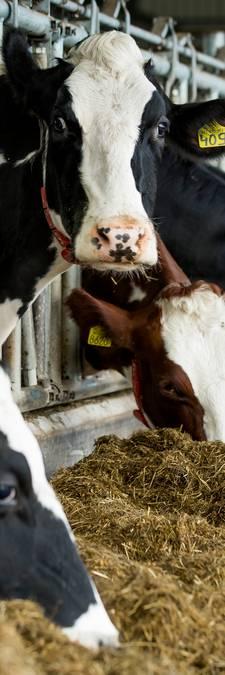 'Ik ben boerin... en ik ben bang'