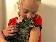 Kitten die in Emmeloord uit auto is gegooid herenigd met bazinnetje