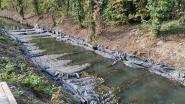 Proefproject met matten in de Lieve moet historische vervuiling oplossen