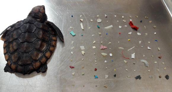 Het natuurcentrum Gumbo Limbo deelde een foto van het overleden dier op sociale media.