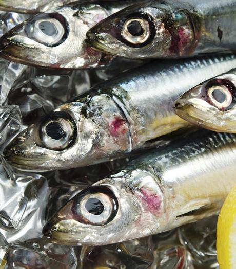 Moerdijk mocht dan een vissersdorp zijn, vis werd er amper gegeten