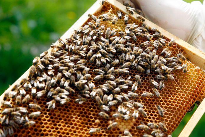 De zeshoekige raten zijn kraamkamers voor larven én opslagplek voor honing. Bijen houden ze schoon, imkers plukken er de 'zoete vruchten' van.