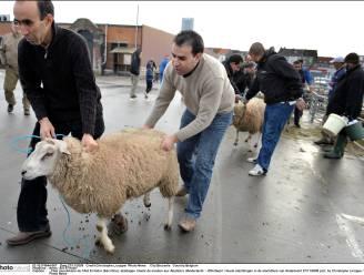 Bijna 1.100 dieren onverdoofd geslacht in slachthuis van Anderlecht