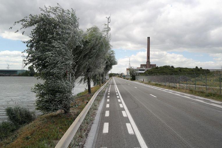 De bomen en de rijbaan lijken wel besneeuwd nadat de witte stof enkele honderden meters werd meegevoerd door de wind.