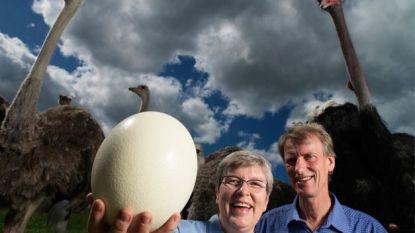 Het Guinness Book of Egg Records