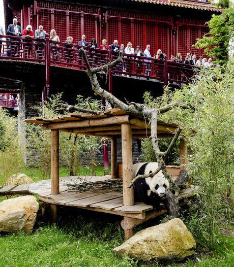 Babypanda kost Ouwehands Dierenpark half miljoen euro