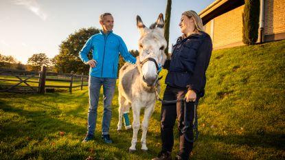 Ezelin Hope succesvol geopereerd en gerevalideerd in Lummense paardenkliniek nadat ze in het hoofd werd geschoten in Frankrijk