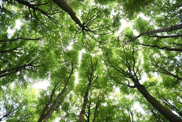 Leren bomen snoeien met het Regionaal Landschap