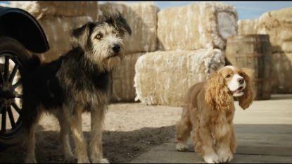 Echte honden stelen de show in eerste trailer 'Lady and the Tramp'