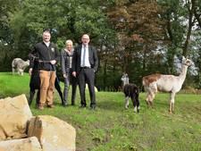Tierpark Nordhorn opent nieuw stekkie voor alpaca's
