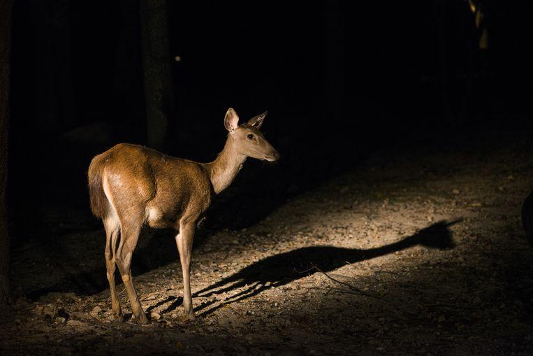 Hoe vergaat het de dieren van Artis 's nachts? Beeld Shutterstock