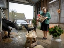Langs de koeien van Joke vleespakketten afhalen voor kerst: 'Steuntje in de rug voor boeren die het moeilijk hebben'