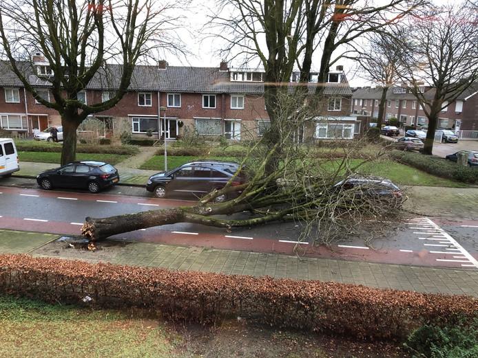 Op de Welschapsedijk in Eindhoven liep een auto flinke schade op nadat een omgewaaide boom op het voertuig terechtkwam. Er zijn meldingen van omgewaaide bomen uit Eindhoven, Nuenen en Budel. Op de Emmasingel in Eindhoven raakten dakplaten los van een gebouw.