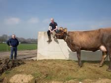 Boeren willen zelf energie opwekken met nieuw Energiepark Oud-Dijk Zuid