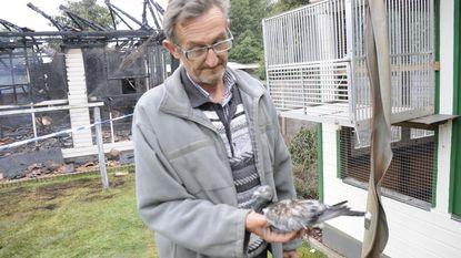 Duiventil nationaal kampioen in as gelegd: honderden diertjes laten het leven