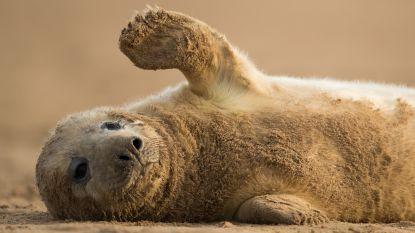 """Zes onthoofde zeehondenpups aangetroffen in Nieuw-Zeelandse baai: """"Wreed en zinloos"""""""