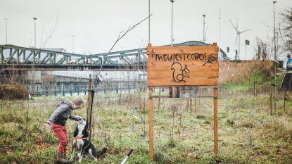 'Meulesteebos' volgende maand al omgewoeld voor archeologisch onderzoek