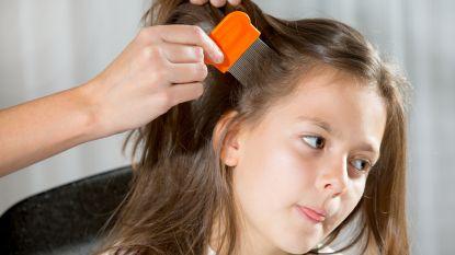 Kammen, uitdrogen en verstikken: Nederlandse Luizenkliniek garandeert luisvrije hoofdhuid in 90 minuten