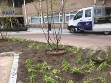 Zeeland heeft er in de Kerkstraat liefst 1200 vaste planten bij