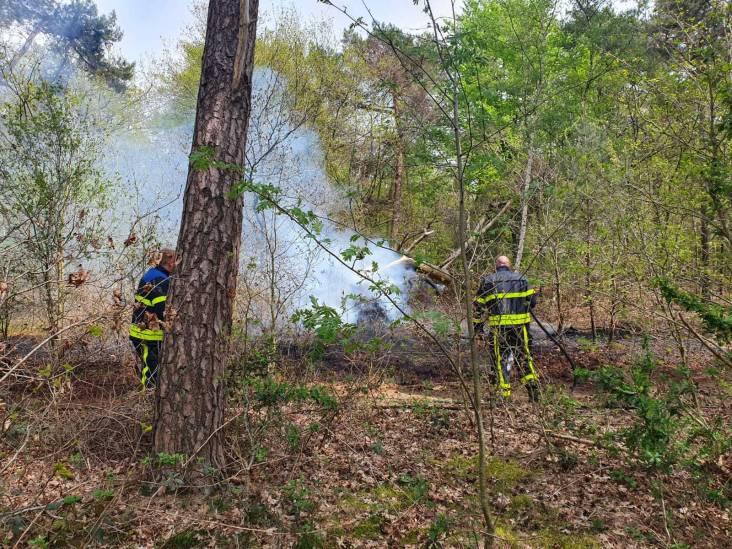 Bosbrand in Rijen geblust