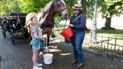 """""""€ 50 voor halfuurtje in paardenkoets"""""""