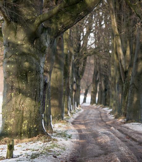 Holtenaar over Beukenlaan: 'Zaag al deze bomen om!'