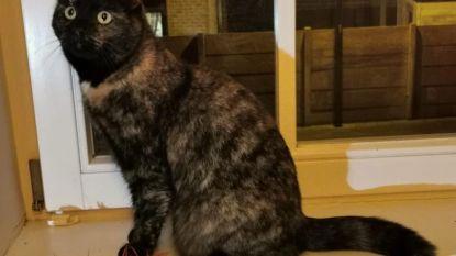 Eigenaar wil teruggevonden katje Noni niet terug: opvang op zoek naar nieuwe thuis via adoptie