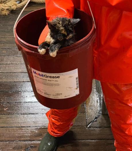 Poes vaart per ongeluk mee op vissersschip: 'Ze krijgt elke dag een harinkje'