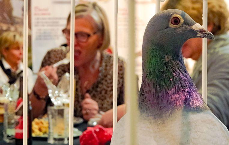 Op de beurs kunnen liefhebbers duiven kopen, maar vinden ze ook alles wat nodig om hun hok in te richten.