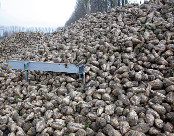 Archieffoto: slordig gestorte suikerbieten in Koewacht.