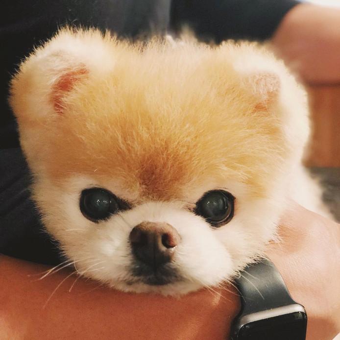 Schattigste Hond Ter Wereld Overleden Van Verdriet Zijn