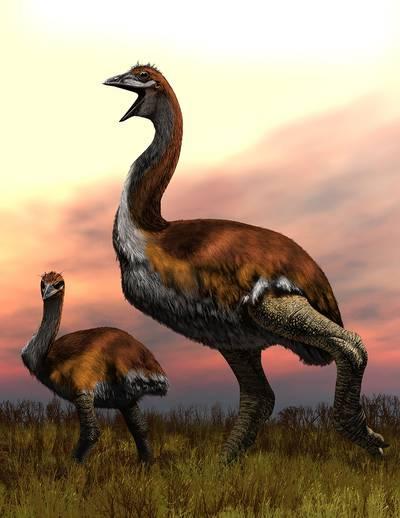 wetenschappers-zijn-het--grootste-ooit-is-olifantsvogel