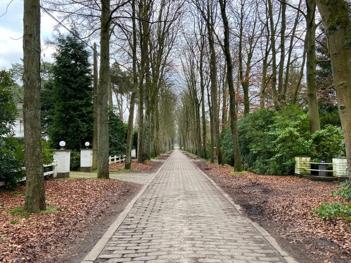 De rechthoekige betonstenen uit de jaren 30 en de kastanjebomen geven de Mostheuvellaan de allures van een dreef.