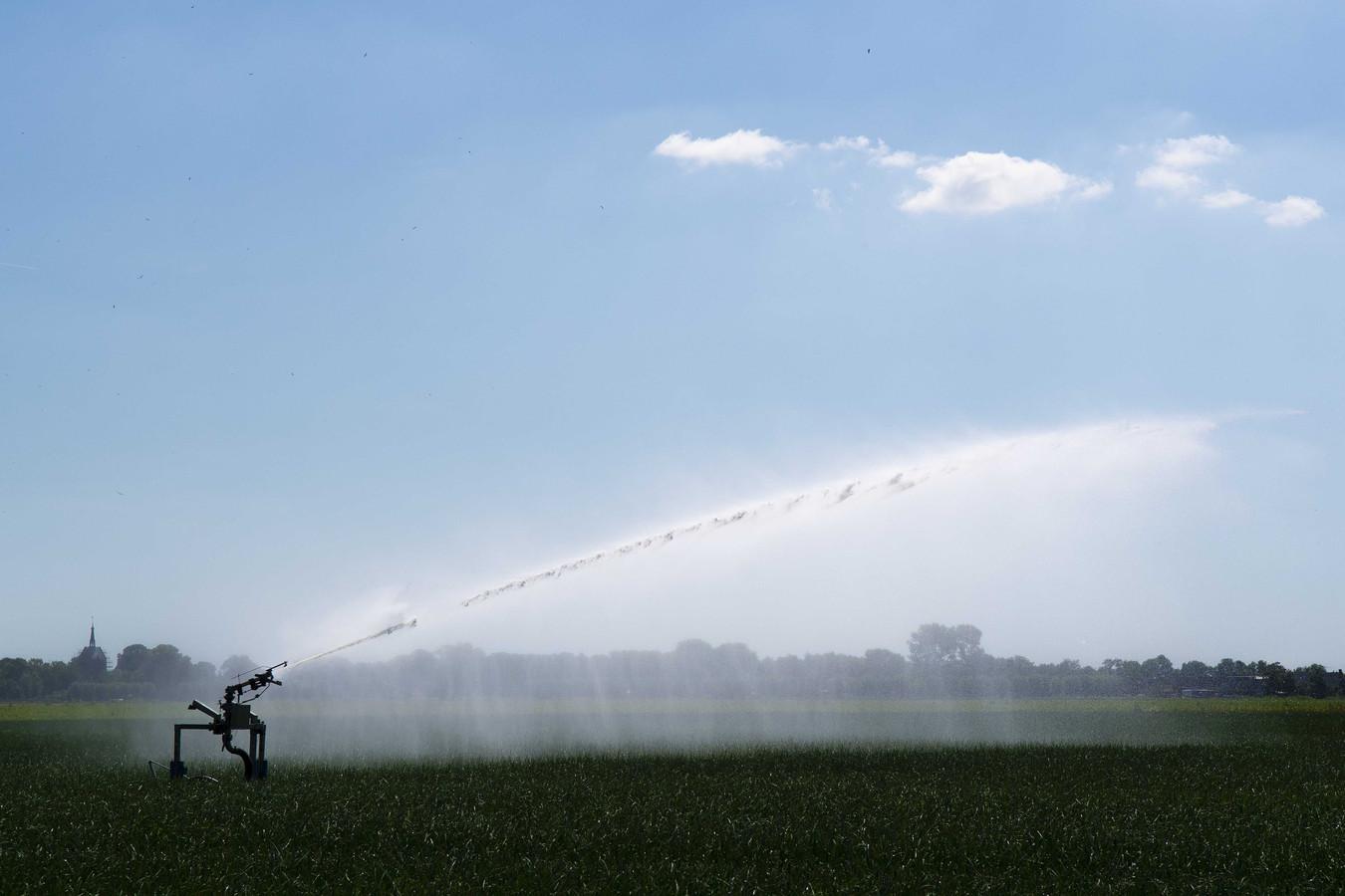 Een uienveld wordt beregend, vanwege de aanhoudende droogte.