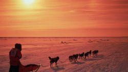 Het is weer tijd voor de zwaarste (en ook stevig bekritiseerde) sledehondenrace ter wereld