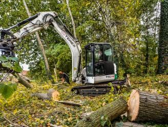 Groenzone wordt gerooid in Walbogaard voor rioleringswerken