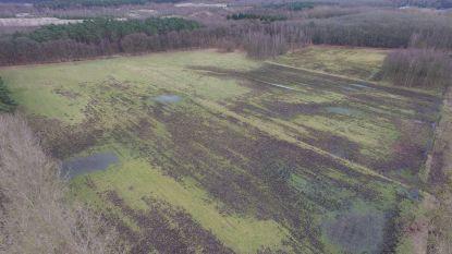 Drone toont hoeveel schade everzwijnen aanrichten