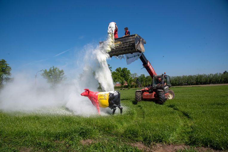Uit protest tegen de melkoverschotten wordt 25 kilo melkpoeder de lucht in gestrooid op een veld in Laarne.