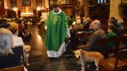 Beestenboel in de kerk: pastoor zegent huisdieren voor Werelddierendag