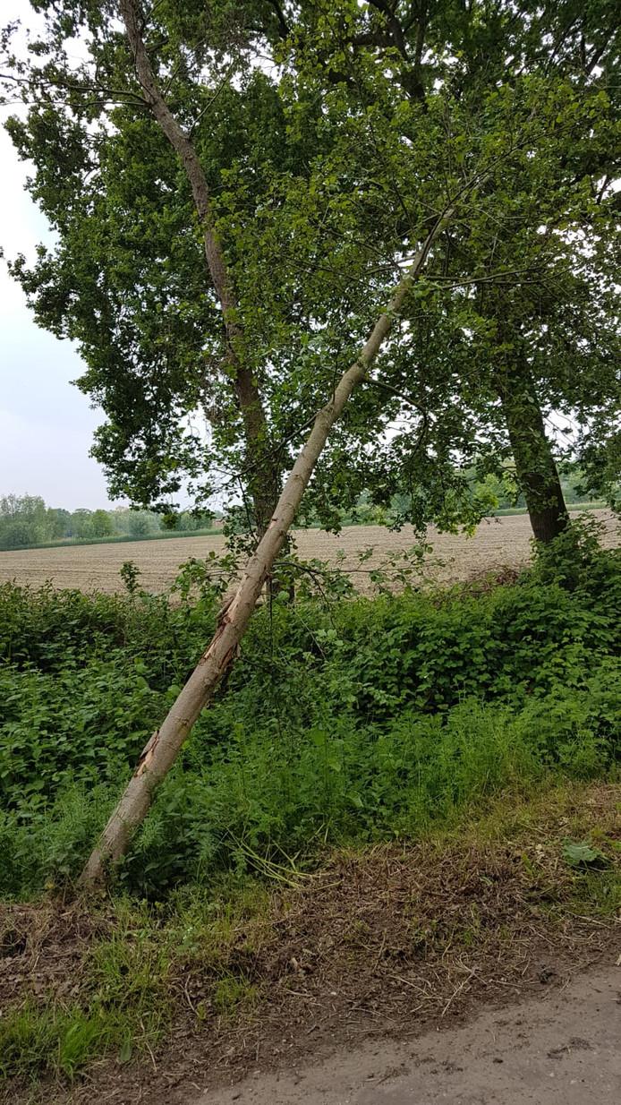 Schade aan bomen en struiken langs de Ruitersdam in Vinkel